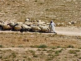 shepherd's field 2