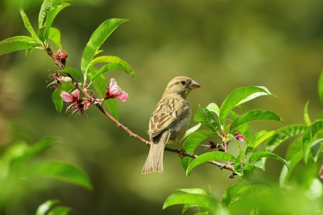 animal-bird-close-up-70069.jpg