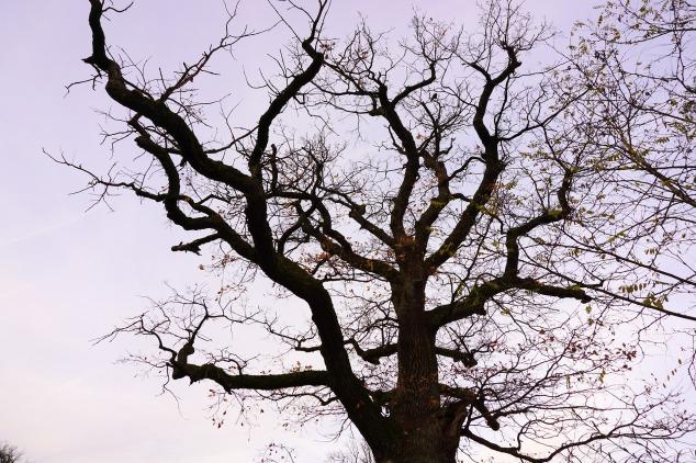 tree-1034194_1920.jpg