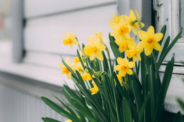 beautiful-bloom-blooming-1018048.jpg