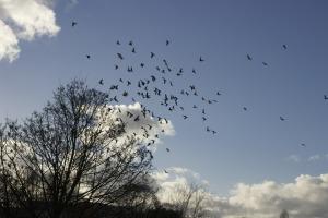 birds-351174_1920