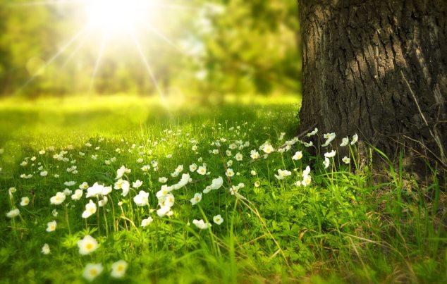 bloom-blossom-flora-60006 (1).jpg
