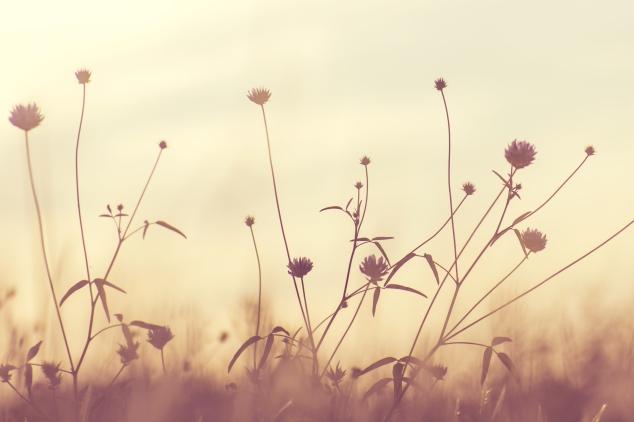 flowers, soft light.jpeg
