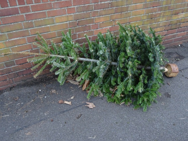 discarded-christmas-tree