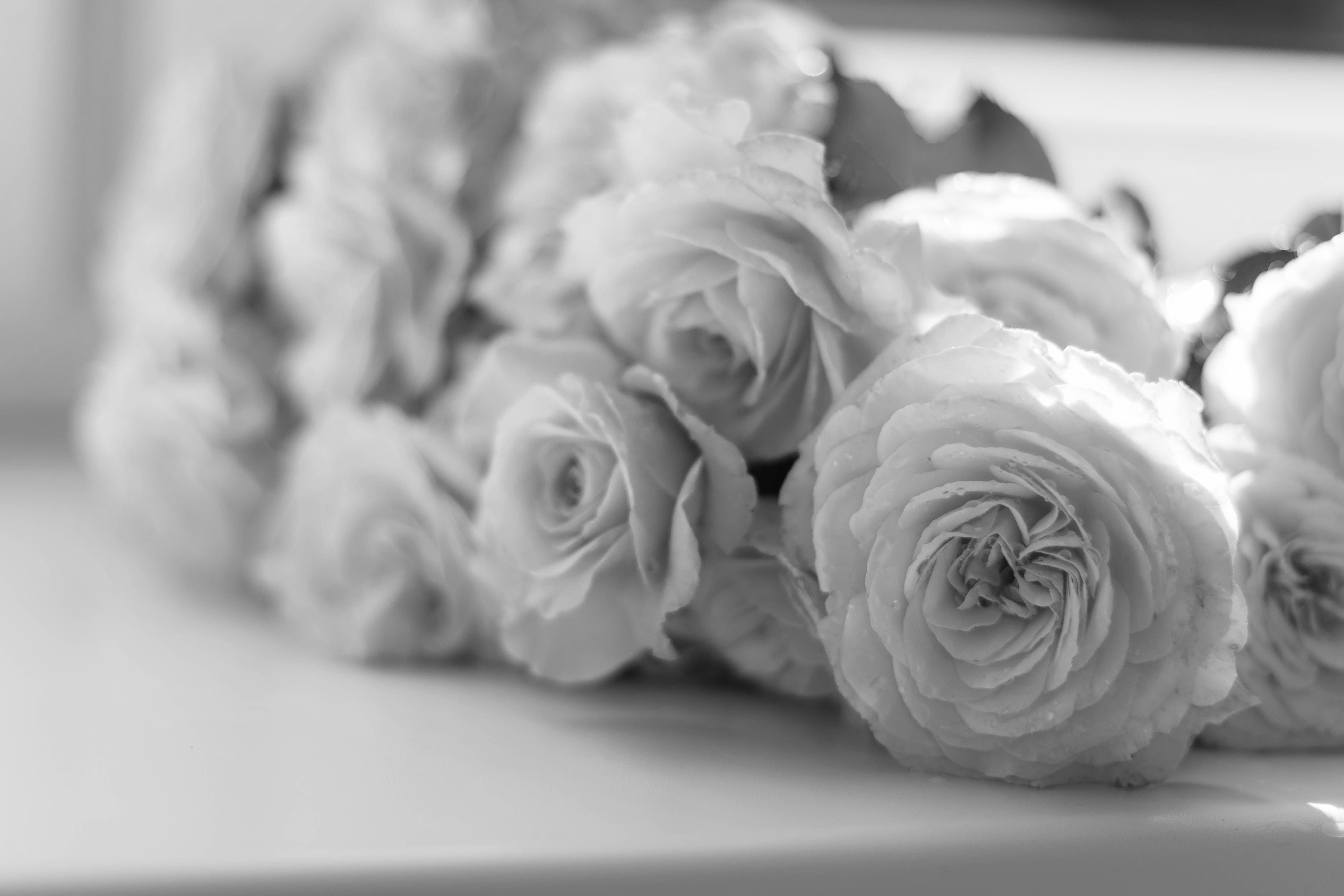 selective-focus-photography-of-pink-peony-flowers-617967b&w