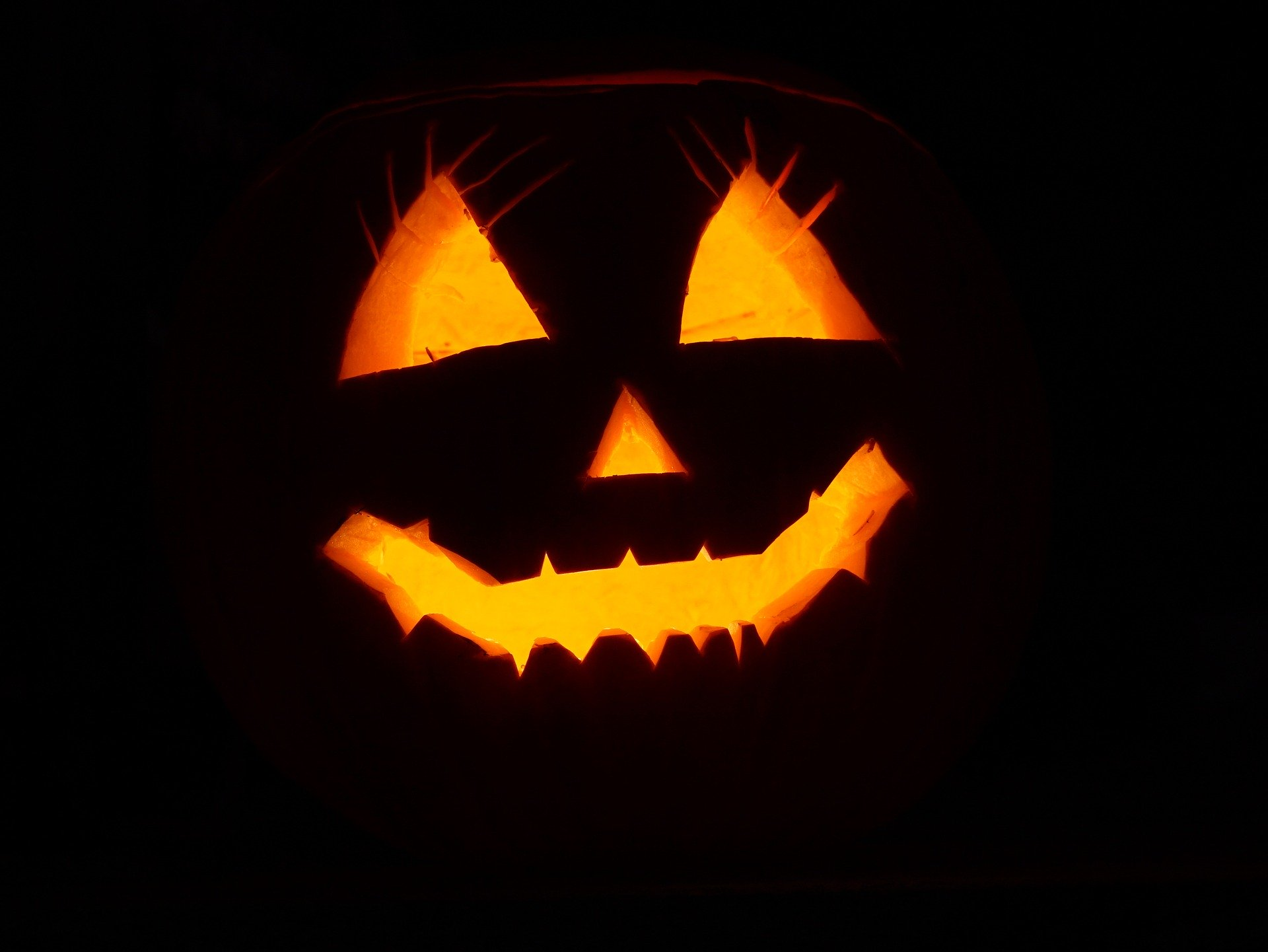 pumpkin-2892303_1920